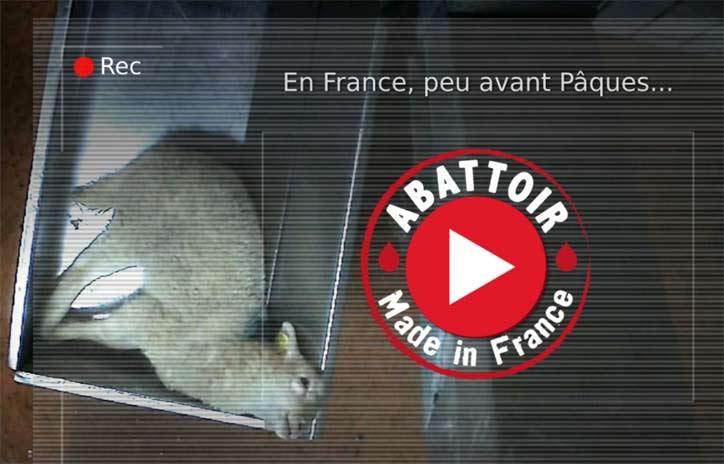 Abattoir de Mauléons - Vidéo de L214