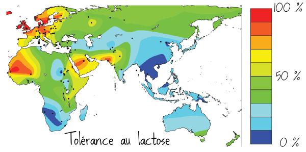 Carte mondiale de la tolérance au lactose