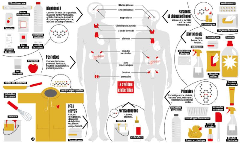 Infographie reprenant la liste des principaux perturbateurs du système endocriniens