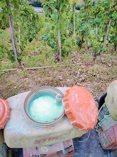 Photogrpahie de bouillie bordelaise dans un atomiseur, devant des plants de vigne, ce qui devraient être interdit pour les aliments bio