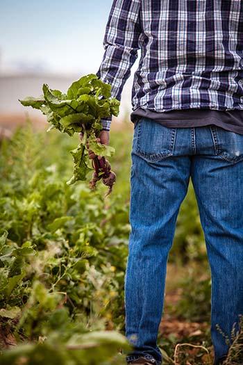 Photographie d'un agriculteur bio dans son champ qui tient à la main une betterave