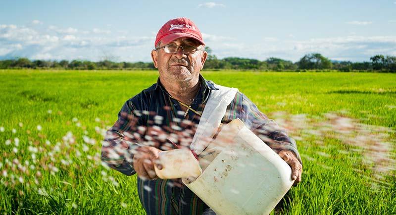Photographie d'un paysan dans son champ