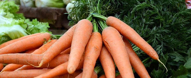 Légumes frais en direct du jardin